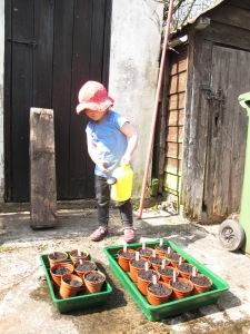 Watering squash seeds