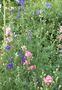 gardening blog larkspur mix