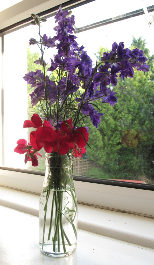 gardening blog sweet peas and larkspur