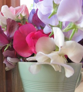 gardening blog sweet peas in a cup