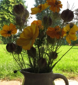 yellow cosmos gardening blog