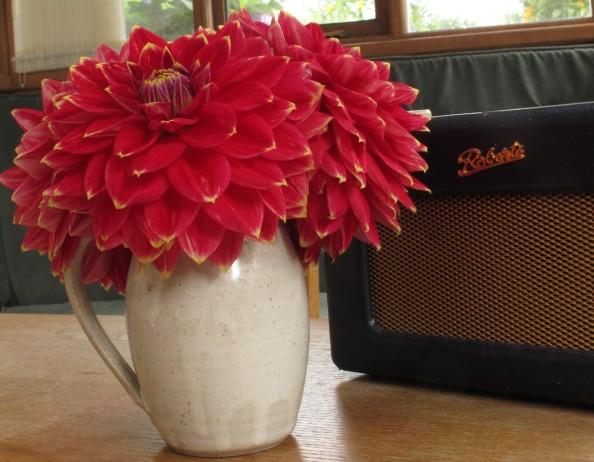 dahlia gardening blog