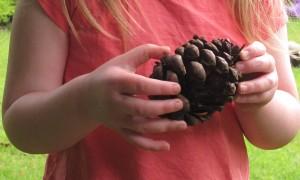 gardening blog fir cone