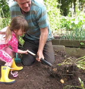 potatoes gardening blog