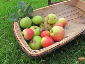 apples in trug gardening blog