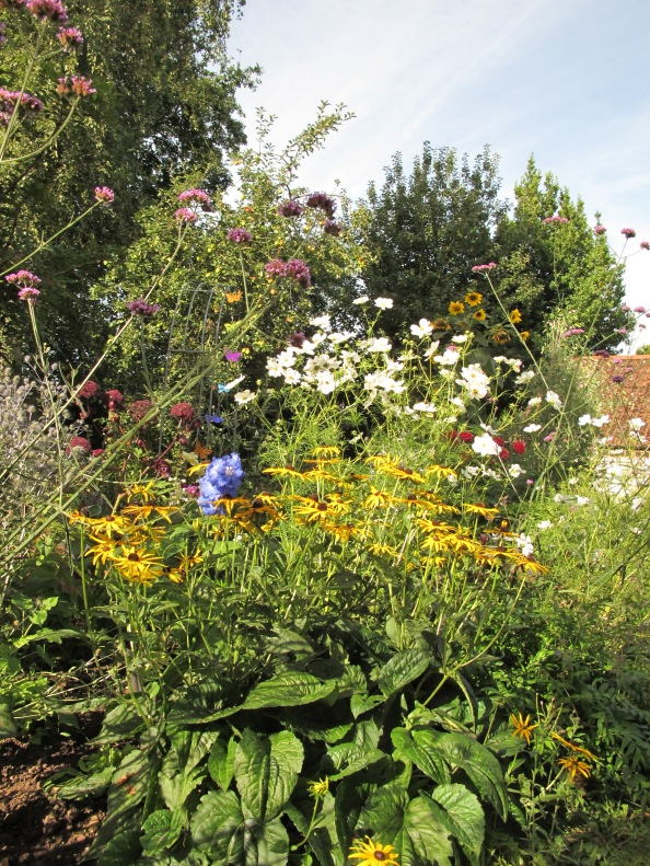 autumn border gardening blog