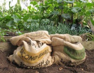 potatoes gardening blog
