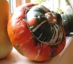 turks turban gardening blog