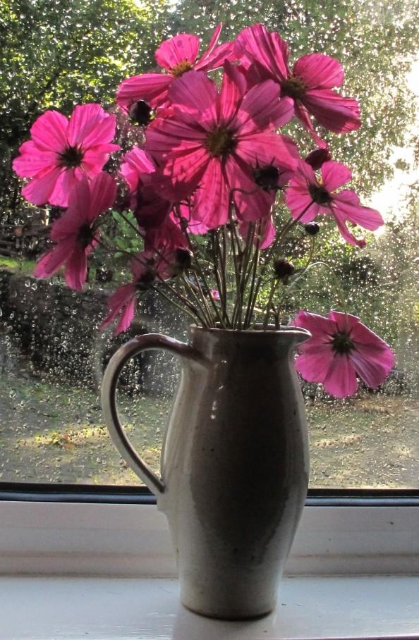 cosmos vase gardening blog