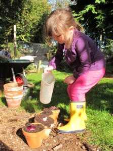 watering hyacinth gardening blog