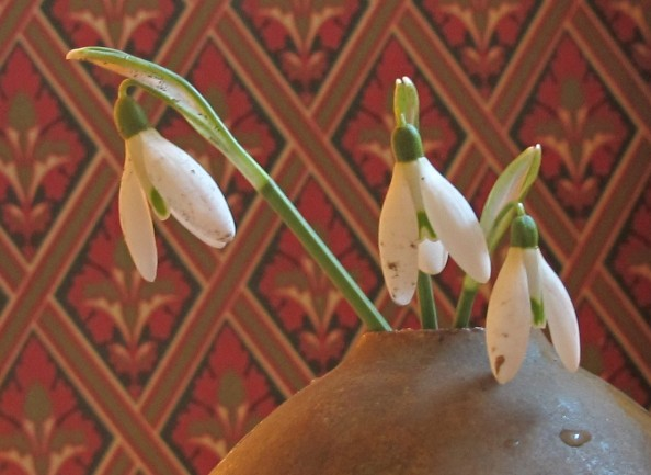 snowdrops sunlight, gardening blog, cottage garden