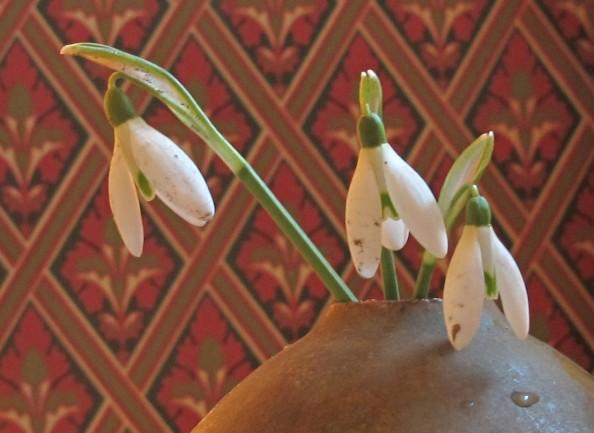 snowdrops sunlight, gardening blog, cottage garden