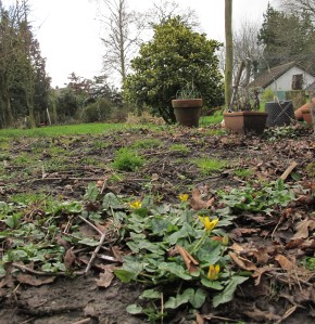cutting garden site, gardening blog, cottage garden