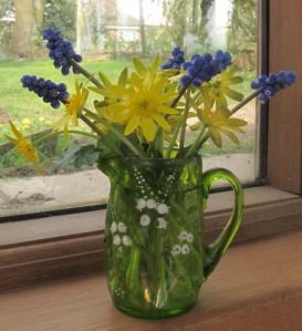aconite muscari cottage garden gardening blog