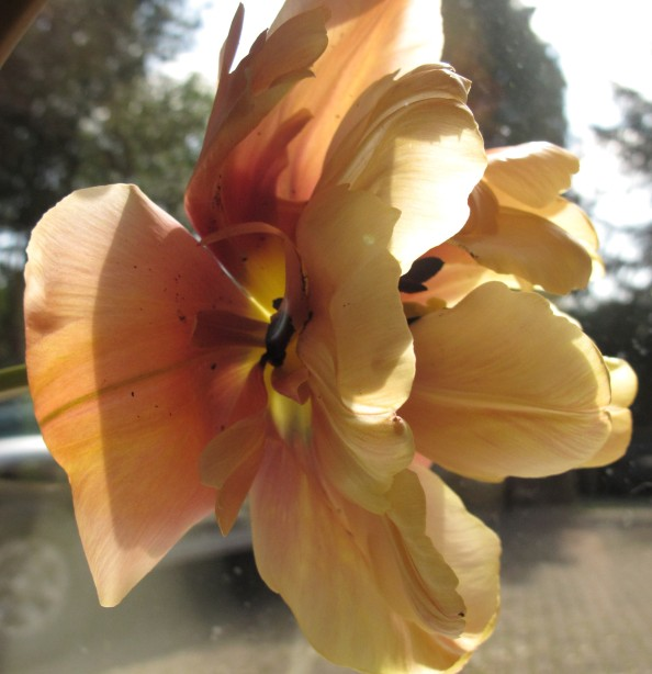 belle epoque cottage garden, gardening blog