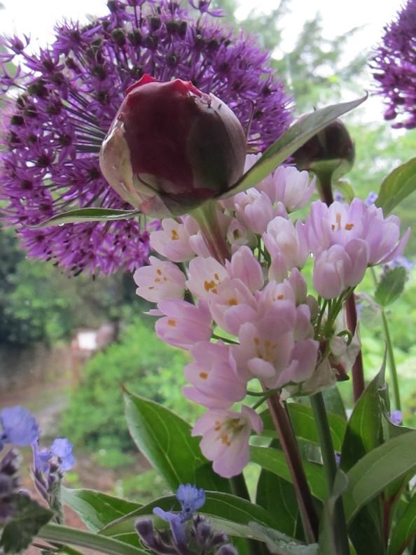 alliums and peony, cottage garden, gardening blog