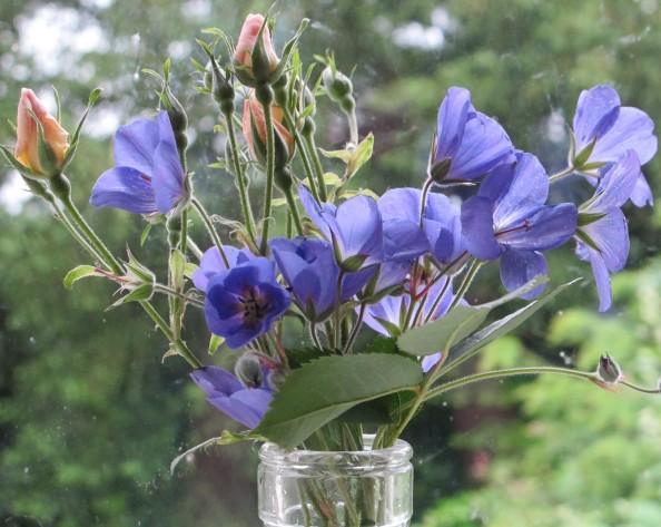 Brookside geranium and rose, cottage garden, gardening blog