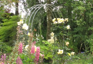 Golden Showers rose, cottage garden blog