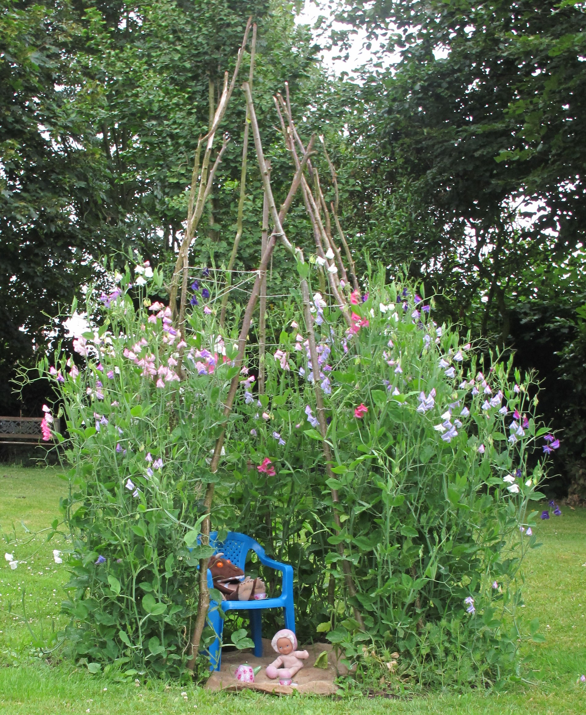 four things i ve learnt about sweet peas brookend
