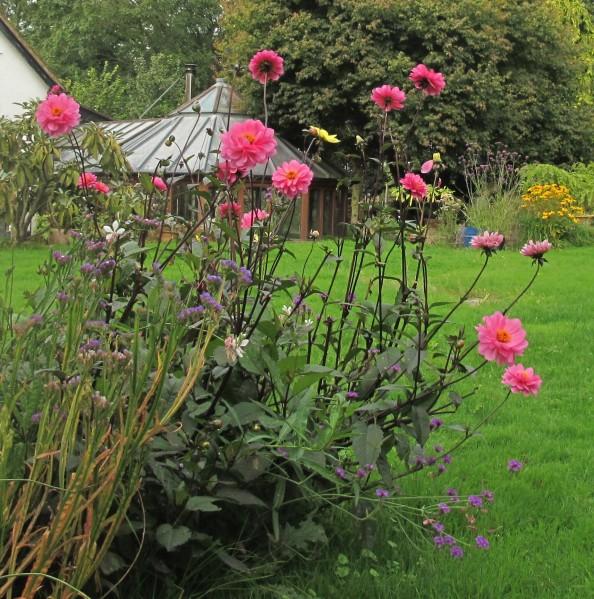 dahlias, cottage garden, gardening blog