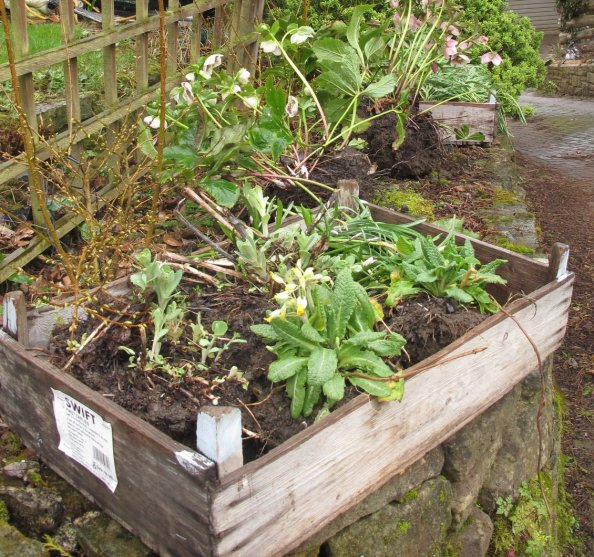 forgotten plants, cottage garden, gardening blog